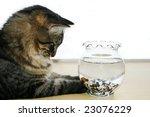 Cat Watching Fish Swimming In...