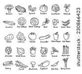 vector hand drawn vegetables  | Shutterstock .eps vector #230866423