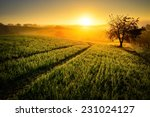 Rural Landscape With A Hill An...