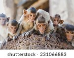 Group Of Baby Monkeys