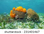 Small photo of Underwater life on a shallow seabed of the Caribbean sea with Great Star coral and Agelas sponges