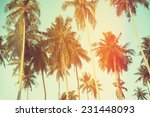 palm trees at tropical coast ... | Shutterstock . vector #231448093