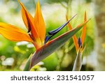 Colorful Of  Bird Of Paradise...
