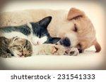 Stock photo puppy and kitten sleeps 231541333