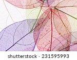 decorative skeleton leaves... | Shutterstock . vector #231595993