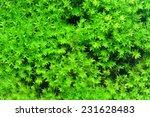 Macro Of White Frok Moss. ...
