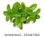 mint leaf close up on a white... | Shutterstock . vector #231667363