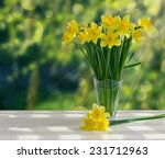 Bouquet Of Yellow Daffodils In...