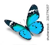beautiful blue butterfly flying ... | Shutterstock . vector #231779257