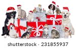 Stock photo cute group of pets in christmas 231855937