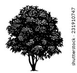 vector tree in engraved style | Shutterstock .eps vector #231910747