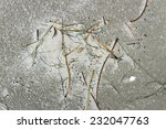 natural still life on the sand. | Shutterstock . vector #232047763