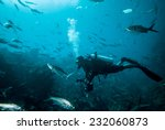 diver and group of fishes in... | Shutterstock . vector #232060873