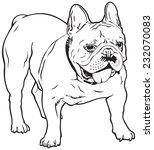 french bulldog dog breed  well...   Shutterstock .eps vector #232070083