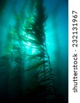 Beautiful Underwater Kelp...