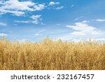 oat field | Shutterstock . vector #232167457