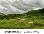 cows on the pyrenees mountains... | Shutterstock . vector #232187947