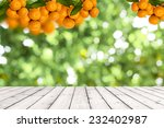 Bunch Of Ripe Oranges Hanging...