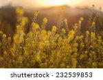 Yellow Wildflowers Under Sunse...