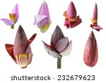 Set Of Banana Flower Isolated...