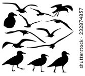sea gull silhouette  vector   | Shutterstock .eps vector #232874857