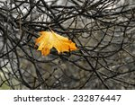 A Yellow Leaf Is Resting On Th...