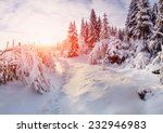 beautiful tree in the snow on a ... | Shutterstock . vector #232946983