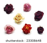 Dried Roses Isolated