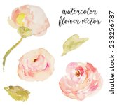 pink watercolor roses.... | Shutterstock .eps vector #233256787