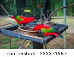 Small photo of The red lory (Eos bornea or Eos rubra)