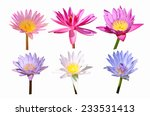 Collection Of Color Water Lily...