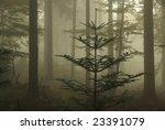 forest in fog | Shutterstock . vector #23391079