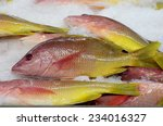 Small photo of Amarillo Snapper (Lutjanus argentiventris) - also known as Yellow Snapper