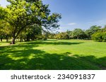 sunny park with shadow of green ... | Shutterstock . vector #234091837