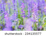 beautiful spring background... | Shutterstock . vector #234135577