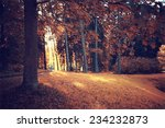 autumn park forest  landscape... | Shutterstock . vector #234232873