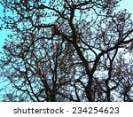 the pattern made by tree... | Shutterstock . vector #234254623