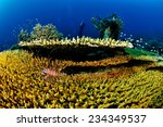 Small photo of Common lionfish and various hard coral reefs in Banda, Indonesia underwater photo. There are bunch of plate hard coral Acropora hyacinthus, and common lionfish swimming above the coral.