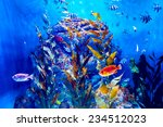 Colorful Aquarium  Showing...
