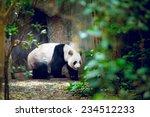 giant panda in singapore zoo | Shutterstock . vector #234512233