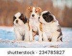 Three Puppies Sitting On The...