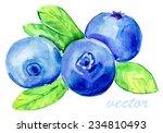 blueberries isolated on white... | Shutterstock .eps vector #234810493