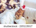 Lovable Ginger Cat Wearing...