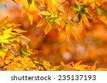 autumn yellow maple leaves... | Shutterstock . vector #235137193