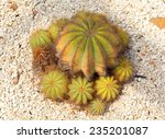 Small photo of Echinocactus Visnaga, thermal plants, cactus