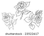 freehand roses drawing. | Shutterstock . vector #23522617