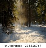 Sunny Day In The Winter Forest