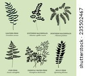 Silhouette Fern Foliage With...