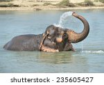 Happy Elephant Bathing In River