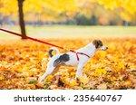 Stock photo closeup on dog on leash outdoors in autumn 235640767